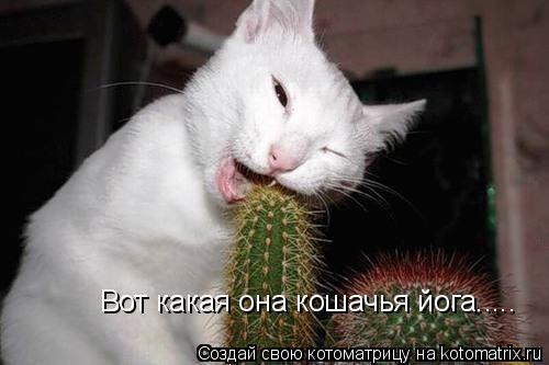 Котоматрица: Вот какая она кошачья йога.....