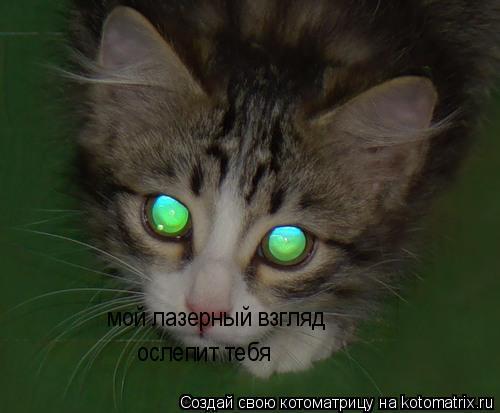 Котоматрица: мой лазерный взгляд ослепит тебя