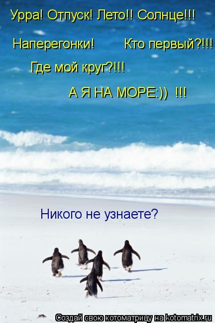 Котоматрица: Урра! Отпуск! Лето!! Солнце!!! Наперегонки!        Кто первый?!!! Где мой круг?!!! А Я НА МОРЕ:))  !!! Никого не узнаете?