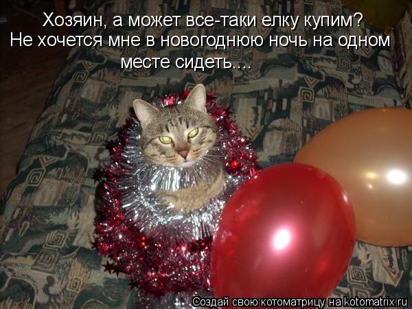 Котоматрица: Хозяин, а может все-таки елку купим? Не хочется мне в новогоднюю ночь на одном месте сидеть....