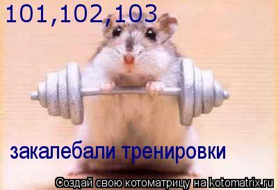 Котоматрица: 101,102,103 закалебали тренировки