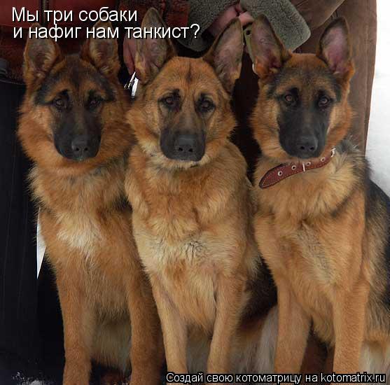Котоматрица: Мы три собаки и нафиг нам танкист?