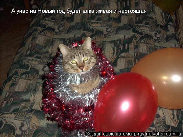 Котоматрица: А унас на Новый год будет елка живая и настоящая