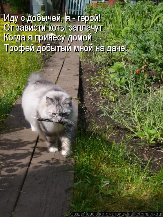 Иду с добычей, я - герой! От зависти коты заплачут, Когда я принесу домой Трофей добытый мной на даче!