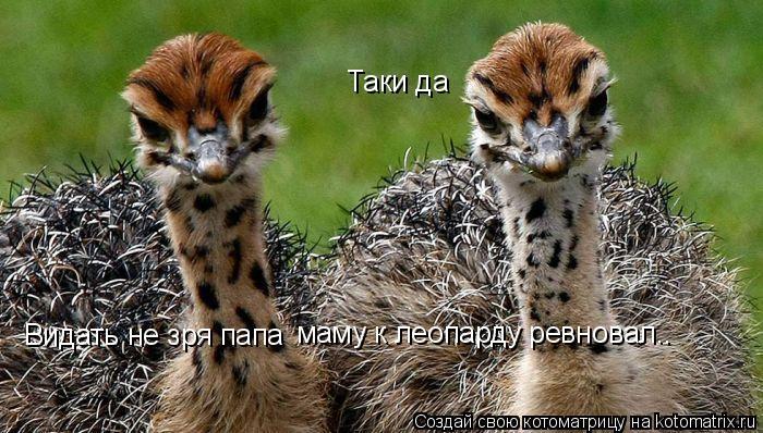 Котоматрица: Видать не зря папа  маму к леопарду ревновал.. Таки да