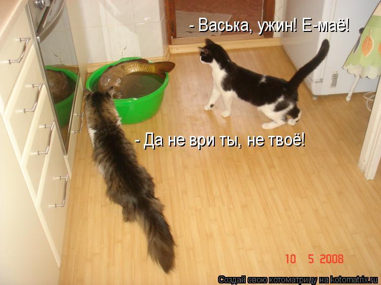 Котоматрица: - Васька, ужин! Е-маё! - Да не ври ты, не твоё!