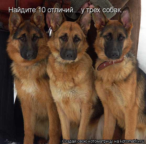 Котоматрица: Найдите 10 отличий....у трех собак...