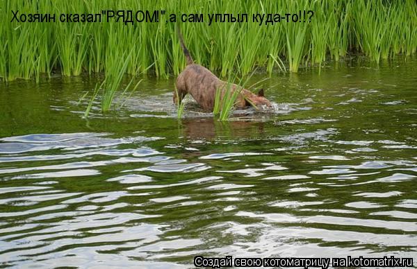 """Котоматрица: Хозяин сказал""""РЯДОМ!"""",а сам уплыл куда-то!!?"""