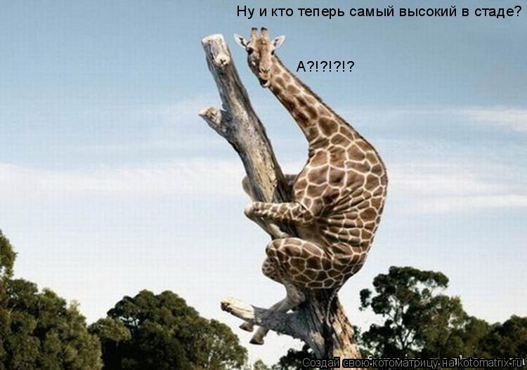 Котоматрица: Ну и кто теперь самый высокий в стаде? А?!?!?!?