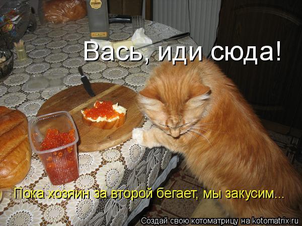 Котоматрица: Вась, иди сюда!  Пока хозяин за второй бегает, мы закусим...