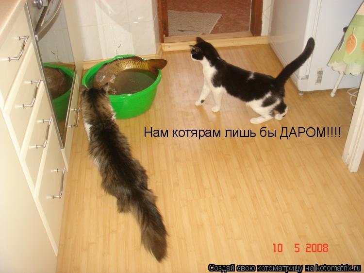 Котоматрица: Нам котярам лишь бы ДАРОМ!!!!