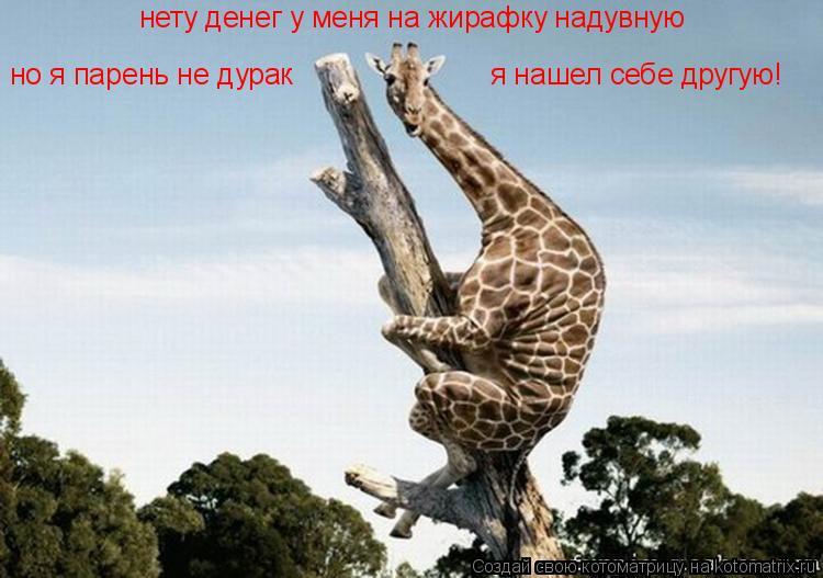 Котоматрица: нету денег у меня на жирафку надувную но я парень не дурак я нашел себе другую!
