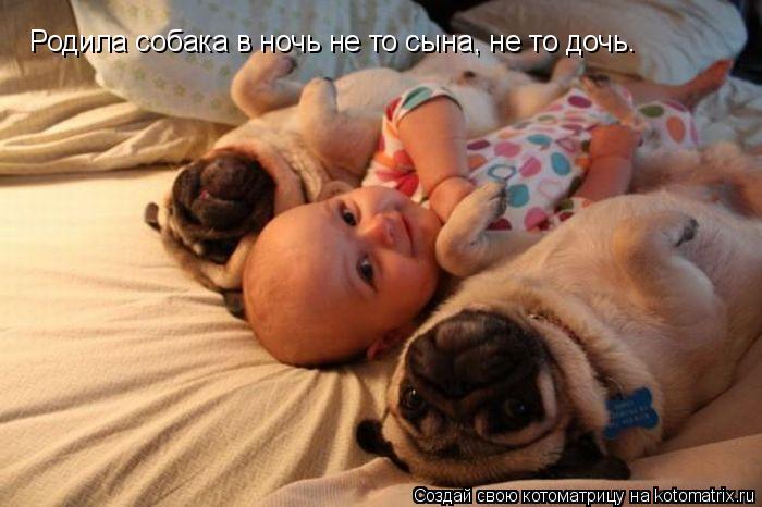 Котоматрица: Родила собака в ночь не то сына, не то дочь.