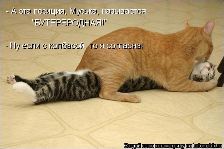 """Котоматрица: - А эта позиция, Муська, называется """"БУТЕРБРОДНАЯ!"""" - Ну если с колбасой, то я согласна!"""