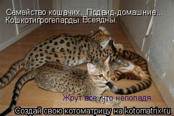 Котоматрица: Семейство кошачих...Подвид-домашние... Кошкотигрогепарды. Всеядны. Жрут все, что непопадя.