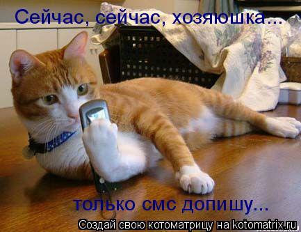 Котоматрица: Сейчас, сейчас, хозяюшка... только смс допишу...