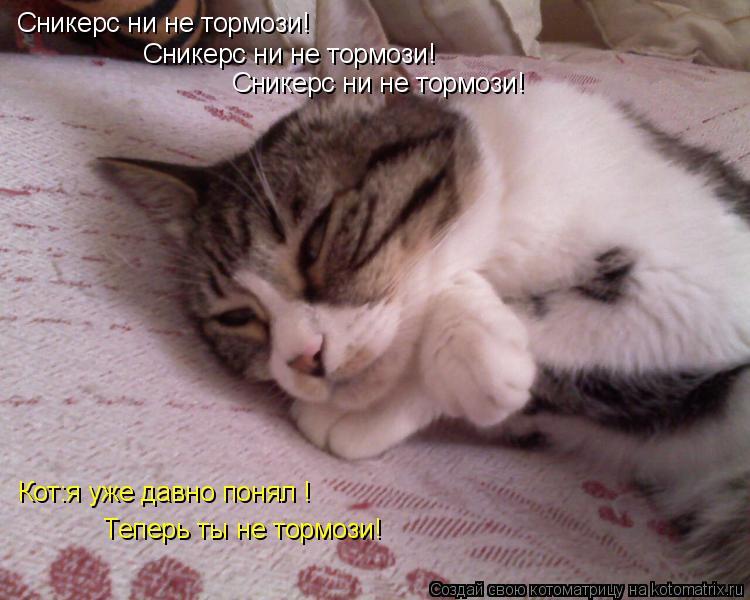 Котоматрица: Сникерс ни не тормози! Сникерс ни не тормози! Сникерс ни не тормози! Кот:я уже давно понял ! Теперь ты не тормози!