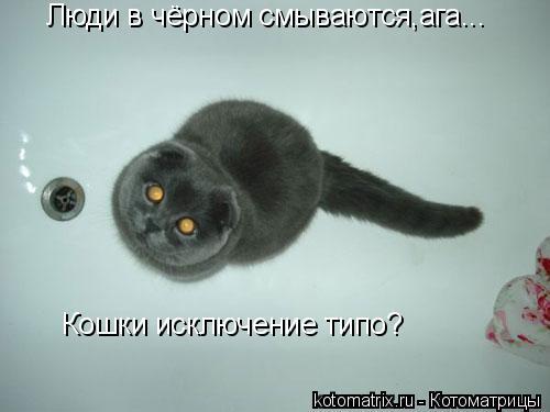 Котоматрица: Люди в чёрном смываются,ага... Кошки исключение типо?