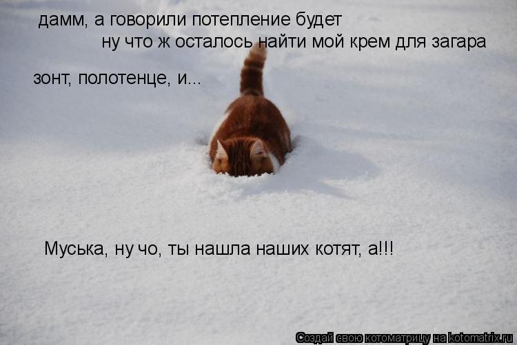 Котоматрица: дамм, а говорили потепление будет ну что ж осталось найти мой крем для загара зонт, полотенце, и... Муська, ну чо, ты нашла наших котят, а!!!