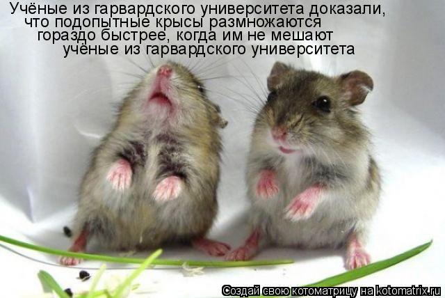 Котоматрица: Учёные из гарвардского университета доказали, что подопытные крысы размножаются  гораздо быстрее, когда им не мешают учёные из гарвардско