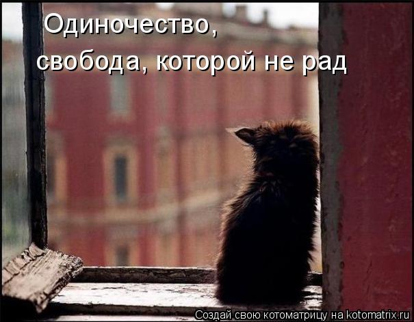 Котоматрица: Одиночество,  свобода, которой не рад