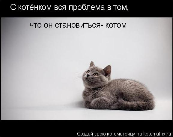 Котоматрица: С котёнком вся проблема в том,  что он становиться- котом