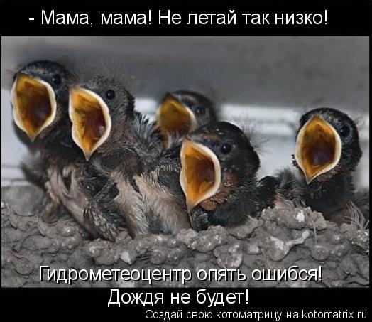 Котоматрица: - Мама, мама! Не летай так низко!  Гидрометеоцентр опять ошибся!  Дождя не будет!