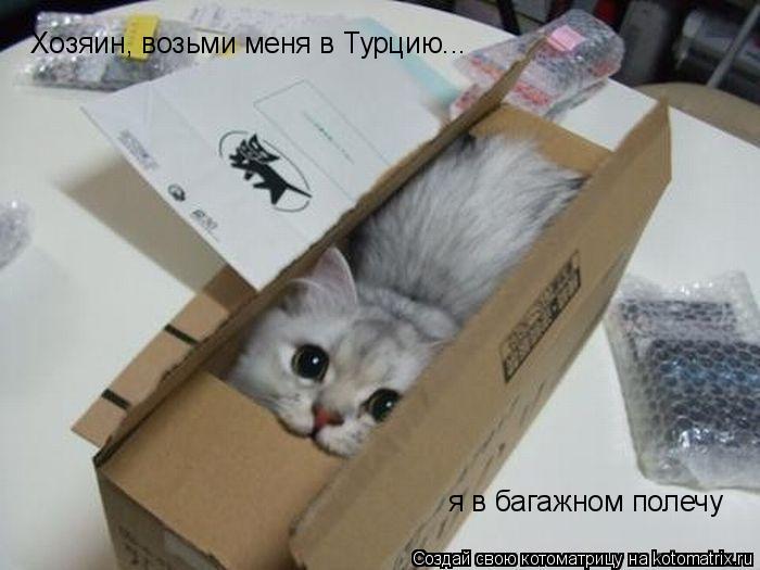 Котоматрица: Хозяин, возьми меня в Турцию... я в багажном полечу