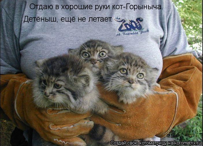 Котоматрица: Отдаю в хорошие руки кот-Горыныча.  Детёныш, ещё не летает.