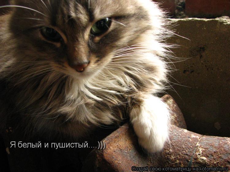 Котоматрица: Я белый и пушистый....)))