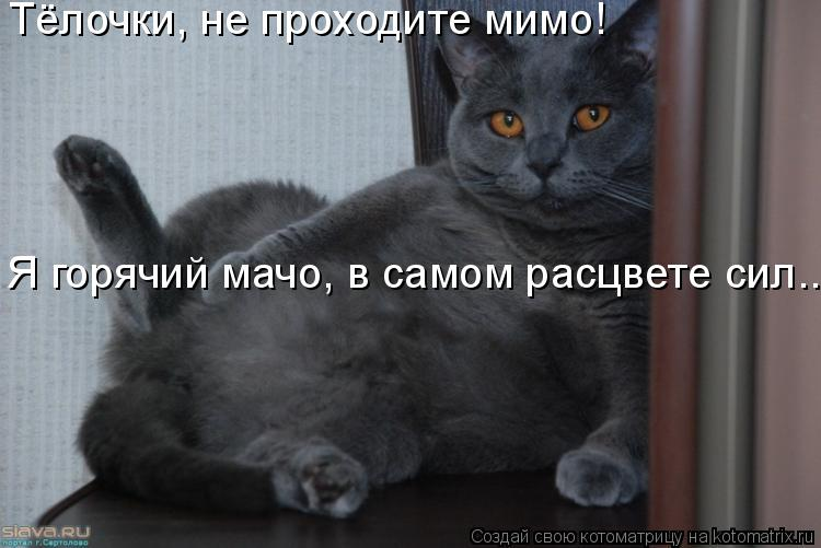Котоматрица: Тёлочки, не проходите мимо! Я горячий мачо, в самом расцвете сил...