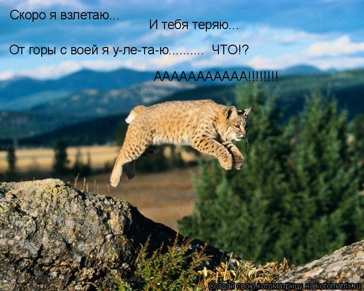 Котоматрица: Скоро я взлетаю... И тебя теряю... ААААААААААА!!!!!!!!  От горы с воей я у-ле-та-ю..........  ЧТО!?