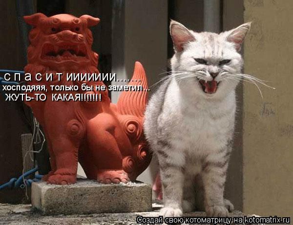 Котоматрица: с п а с и т иииииии....... хосподяяя, только бы не заметил... ЖУТЬ-ТО  КАКАЯ!!!!!!!