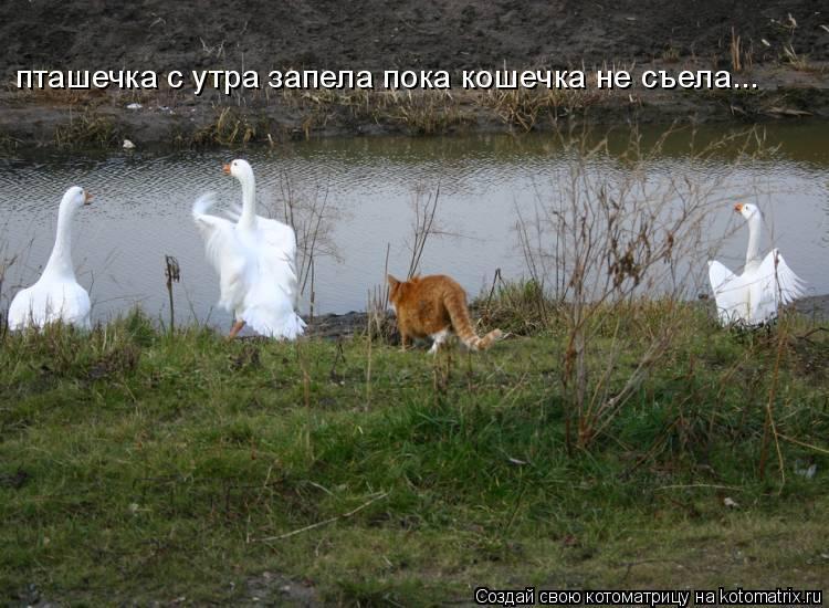 Котоматрица: пташечка с утра запела пока кошечка не съела...
