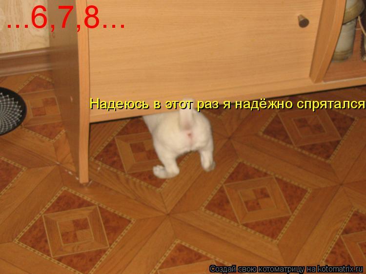 Котоматрица: ...6,7,8... Надеюсь в этот раз я надёжно спрятался