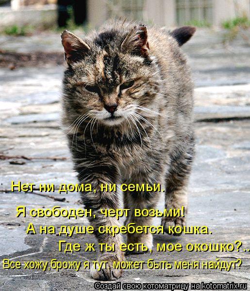 Котоматрица: Я свободен, черт возьми! А на душе скребется кошка.  Где ж ты есть, мое окошко?... Нет ни дома, ни семьи. Все хожу,брожу я тут. может быть меня най