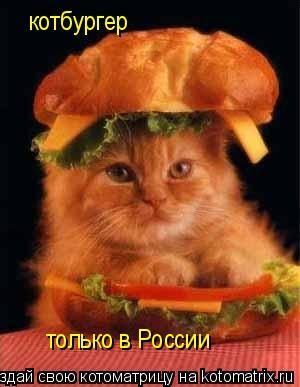 Котоматрица: котбургер только в России