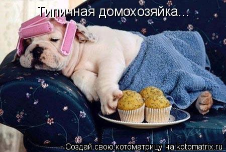 Котоматрица: Типичная домохозяйка...