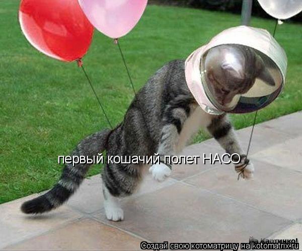 Котоматрица: первый кошачий полет НАСО