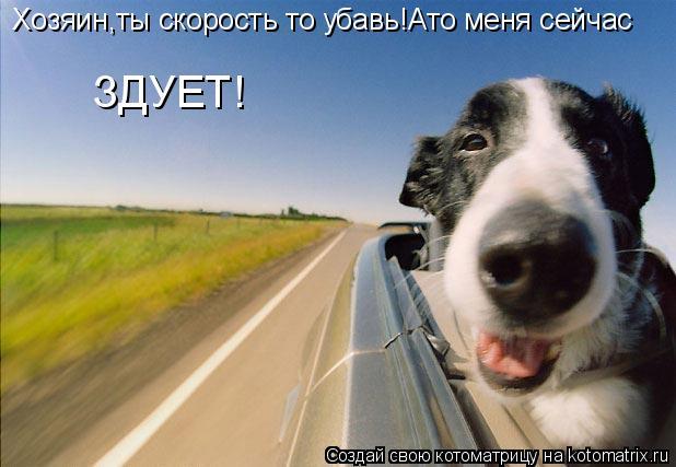 Котоматрица: Хозяин,ты скорость то убавь!Ато меня сейчас ЗДУЕТ!