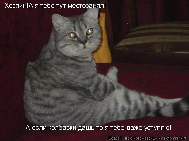 Котоматрица: Хозяин!А я тебе тут местозанял! А если колбаски дашь то я тебе даже уступлю!