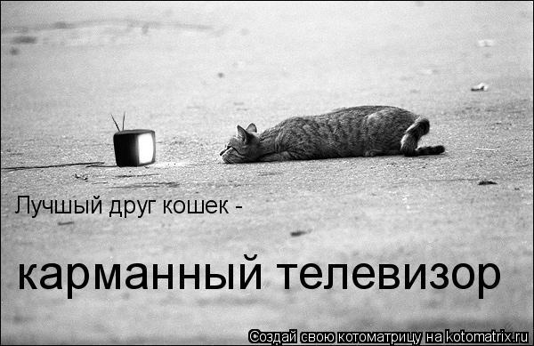 Котоматрица: Лучшый друг кошек - карманный телевизор