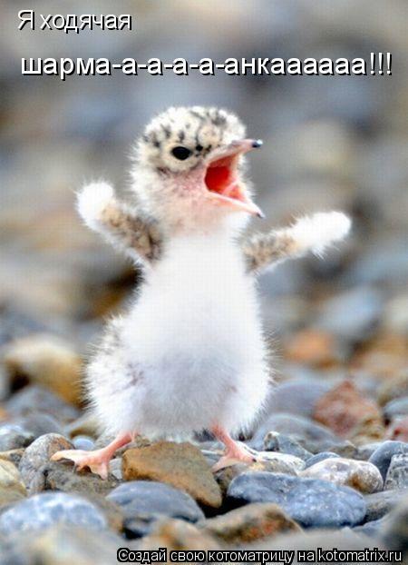 Котоматрица: Я ходячая  шарма-а-а-а-а-анкаааааа!!!