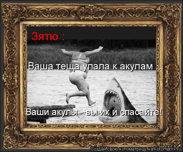 Котоматрица: Зятю : Ваша теща упала к акулам ... Ваши акулы - вы их и спасайте!