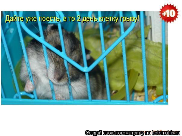 Котоматрица: Дайте уже поесть, а то 2 день клетку грызу!