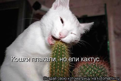 Котоматрица: Кошки плакали, но ели кактус...