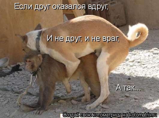 Котоматрица: Если друг оказался вдруг, И не друг, и не враг, А так...