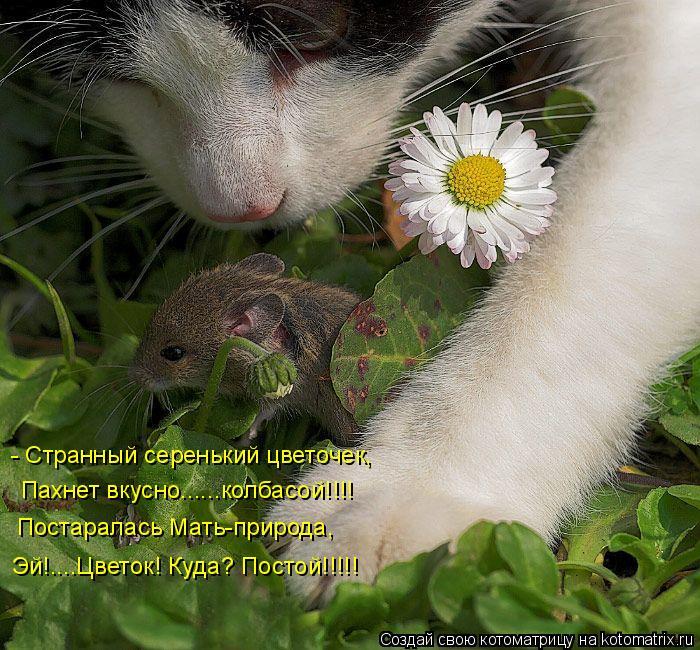Котоматрица: - Странный серенький цветочек, Пахнет вкусно......колбасой!!!! Постаралась Мать-природа,  Эй!....Цветок! Куда? Постой!!!!!