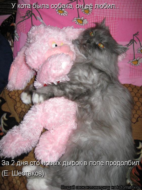 Котоматрица: У кота была собака, он её любил.. За 2 дня сто новых дырок в попе продолбил (Е. Шестаков)