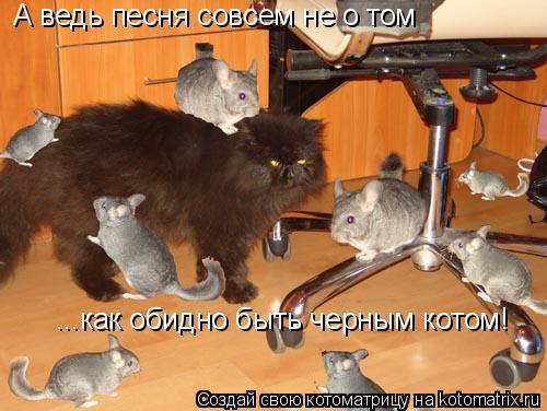 Котоматрица: А ведь песня совсем не о том ...как обидно быть черным котом!
